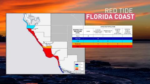 News Scientists Seek New Ways To Combat Florida S Red Tide The